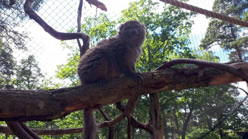 Eskilstuna, Clyde på Parken zoo, 12 juni 2018