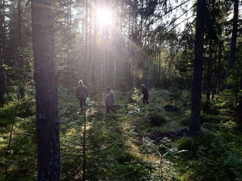 Gnarp Öran, svampplockare, 15 augusti 2019